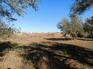 Terrain de 9000 m² à vendre km 15 route de fez Marrakech