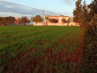 Terrain et ferme en Vente à Mohammedia